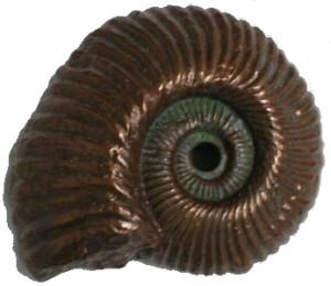 NautilusFossil