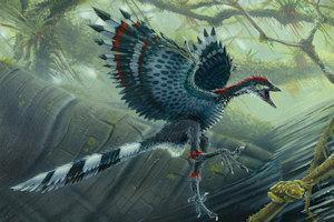 Archaeopteryx. (Credit: Image courtesy of Todd Marshall