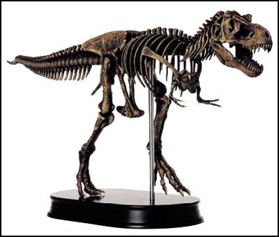 400 x 340 jpeg 25kBTyrannosaurus